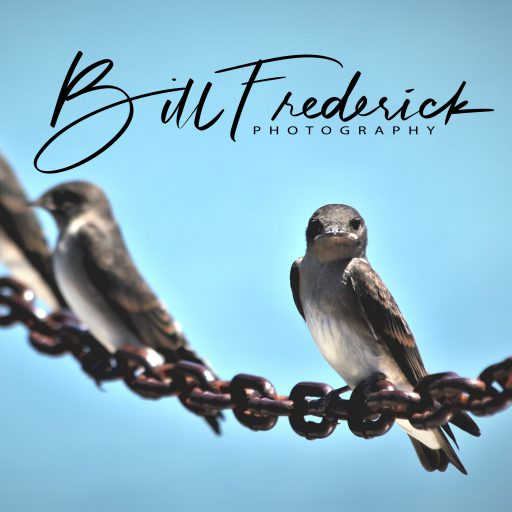 cropped-bird-with-attitude-signed1.jpg