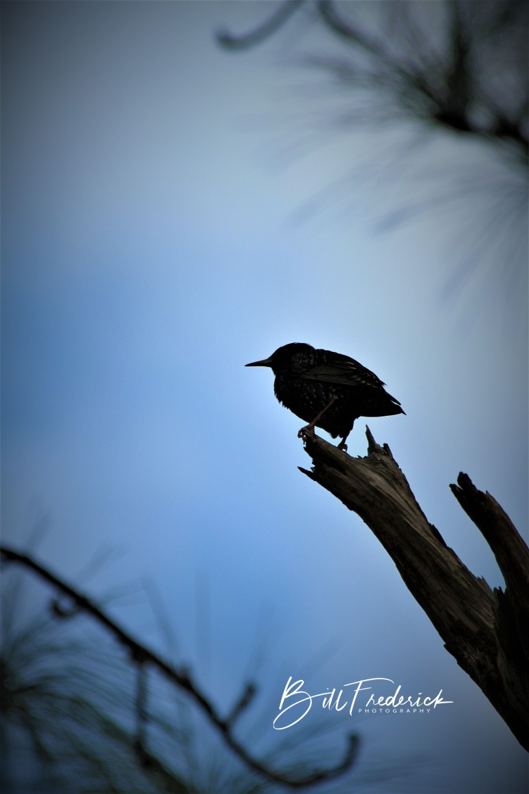 a bird silhouette with sign