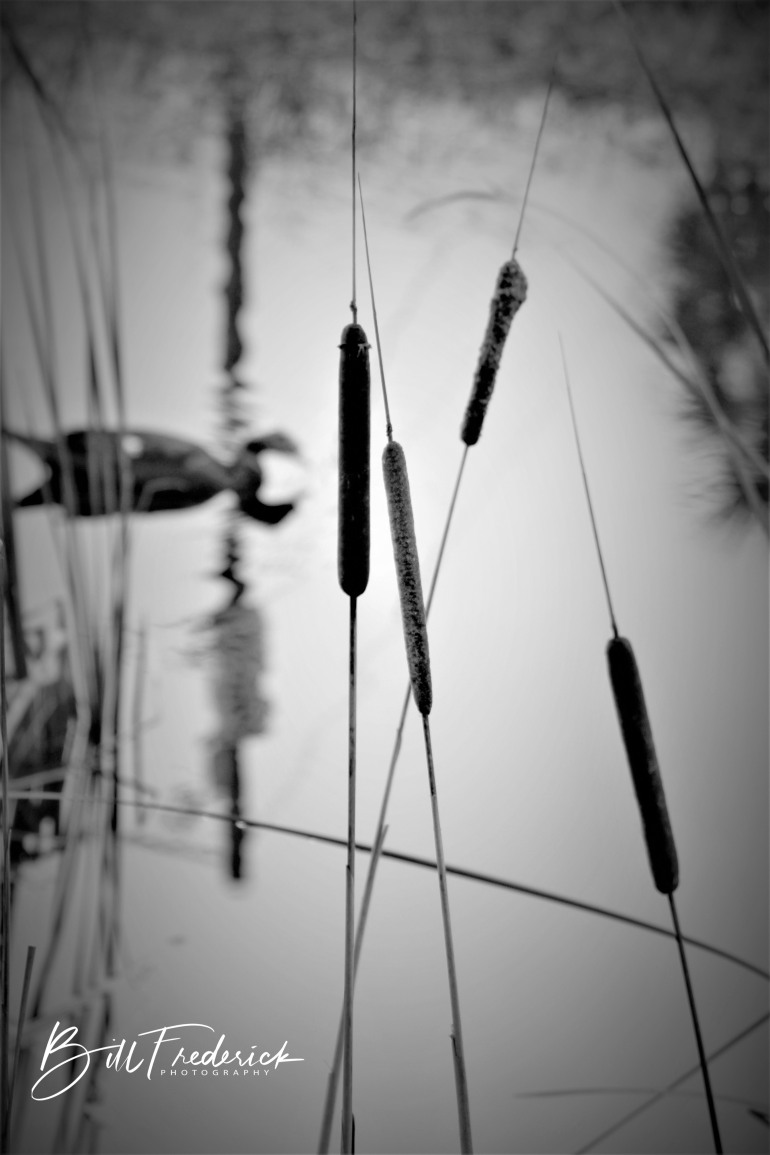 a cattails with sign