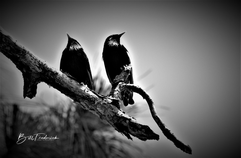 a starlings with sign