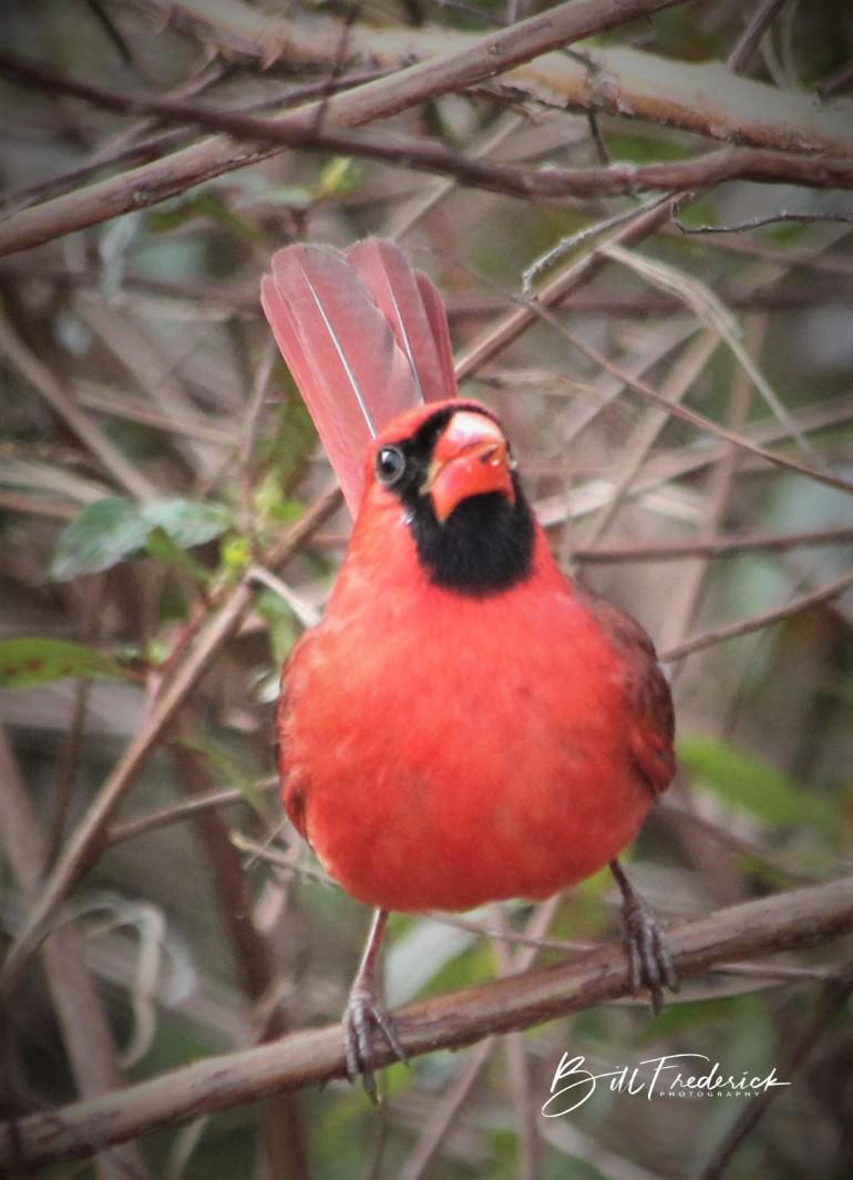 cardinal nead on with sign