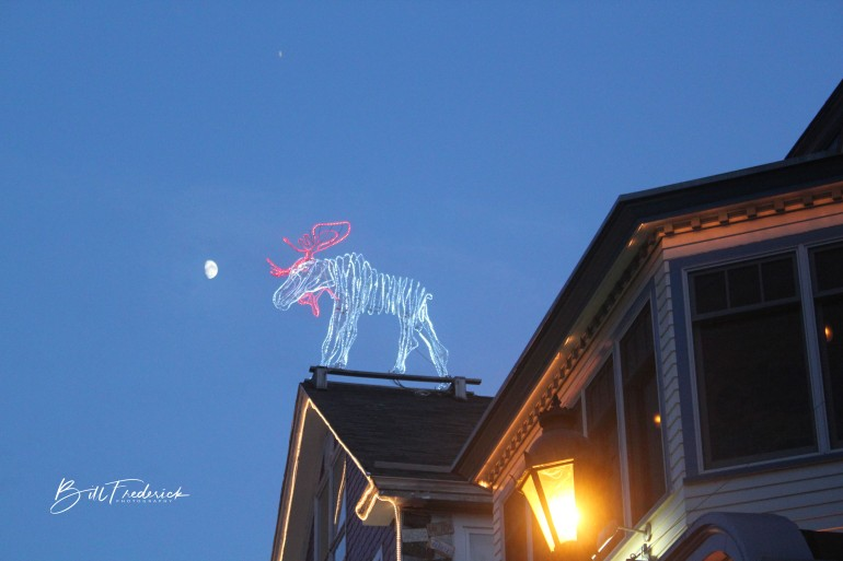 moose on roof with sign